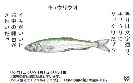 コブタさんのキュウリウオ 4-2.jpg